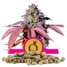 Bulkzaden van Purple Queen