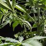 LST Plantenclips van RQS