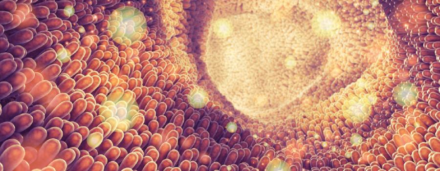 absorptie eetwaren lever gemetaboliseerd THC