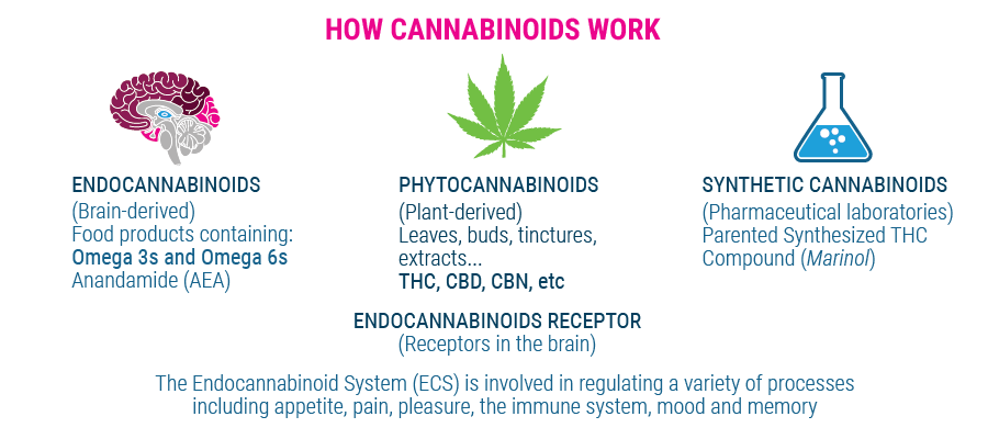 hoe cannabinoïden werk