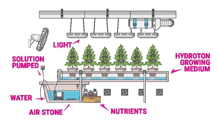 Hydrophonics marijuana Grow