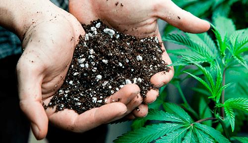 aarde cannabis