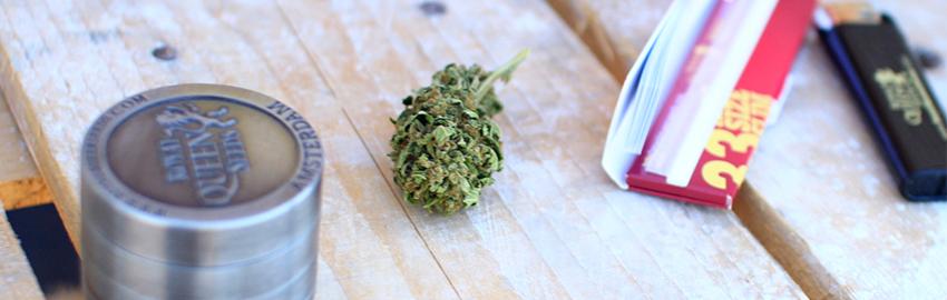 Jack Herer Autoflowering Cannabis