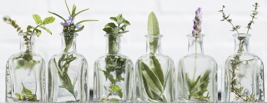 Essentiële Oliën Cannabis insectenluizenluizen