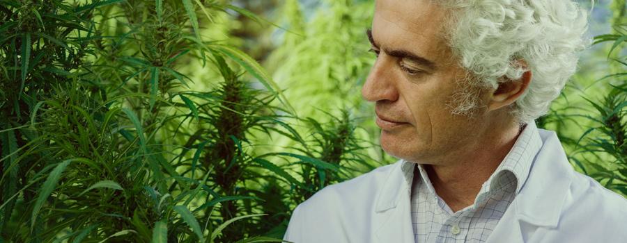 Vader zorgt voor cannabis