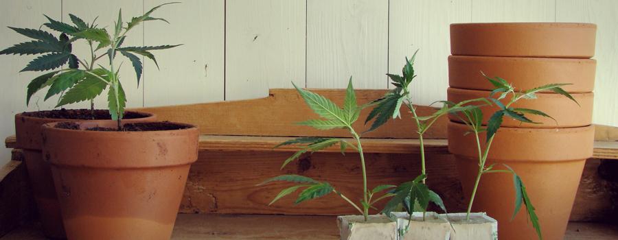 Uruguay parlement legalisatie cannabis