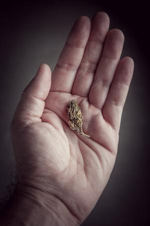 microdosing cannabis consumeren veilig profiteert