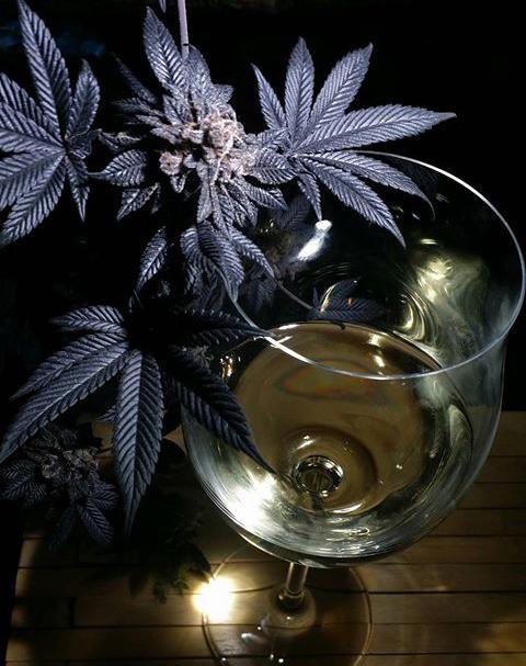 WINE legalisering van cannabis terpenen ENZYMEN