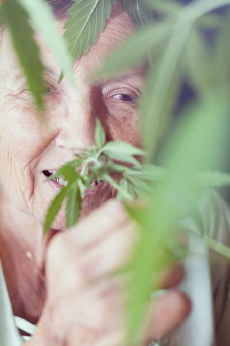 Parkinson Cannabis Royal Queen Medical Strain Chronische pijn Alzheimer Arthritis Depressie