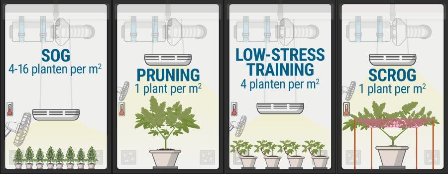 hoeveel cannabisplanten kun je kweken per vierkante meter