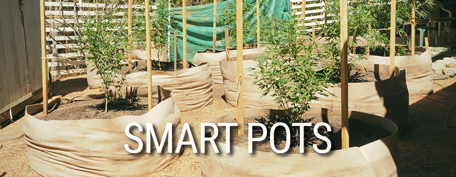 Smart Pots Cannabis Teelt