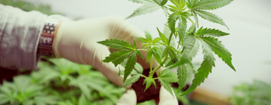 Cannabis federaal agentschap Duitsland