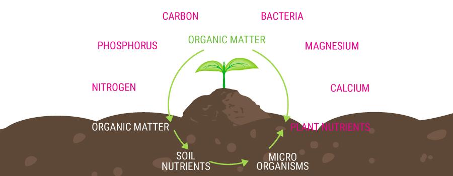Organische voederketen