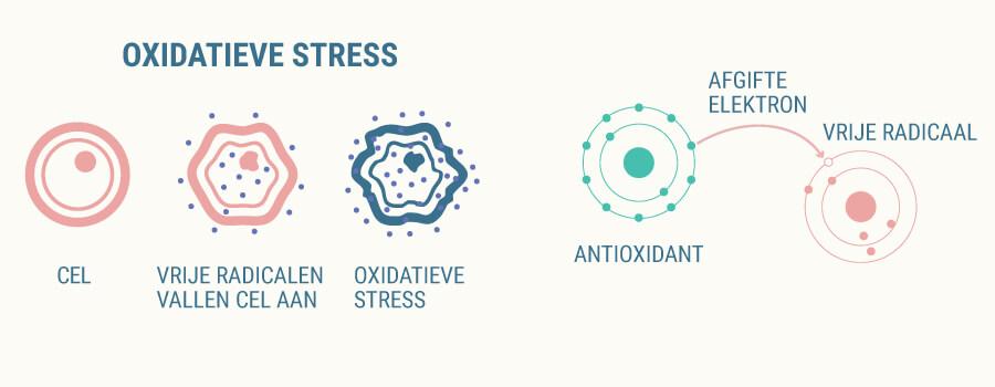 Oxidatieve stress