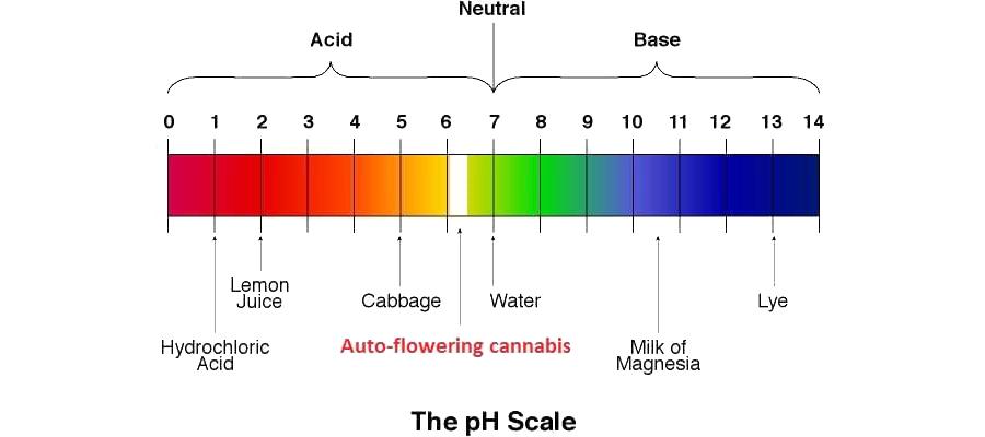 de perfecte pH waarde voor cannabis