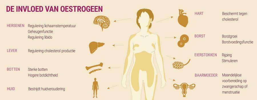 De invloed van oestrogeen en cannabis