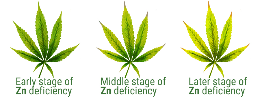 Zink deficiency cannabis leaves