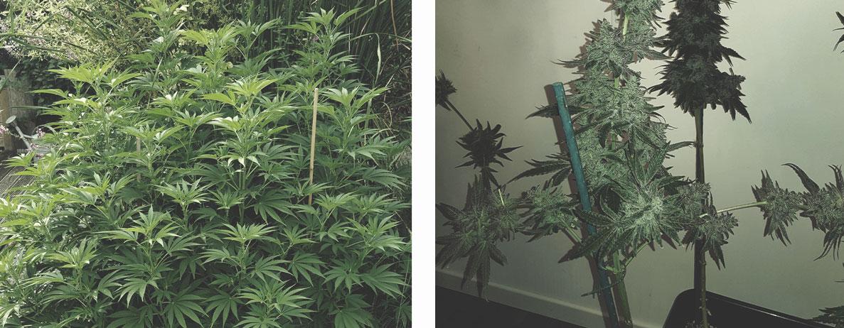 Ondersteun Je Planten met Touw en Stokken