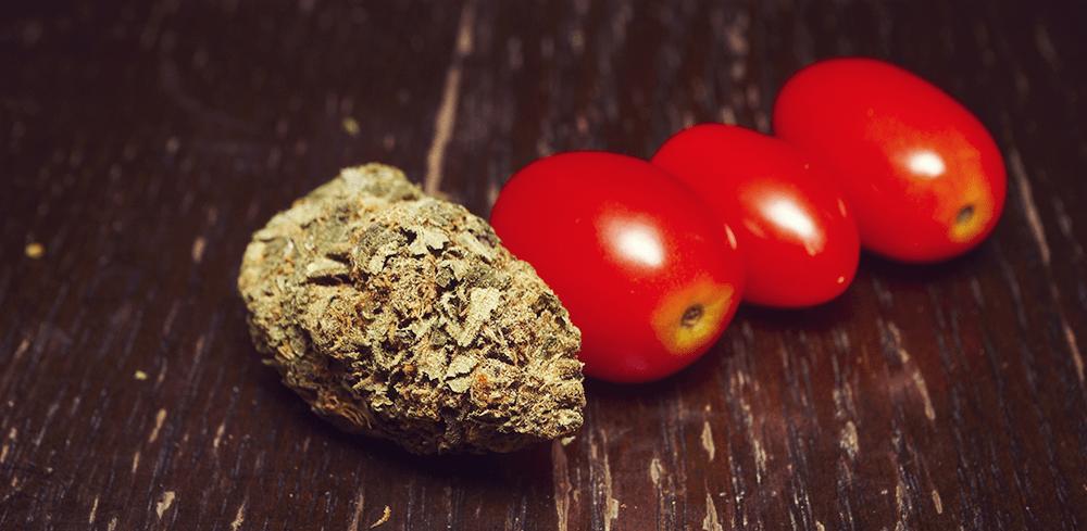 bloody mary cannabis drank tinctuur doordrenkt smakelijk tomatensap wiet