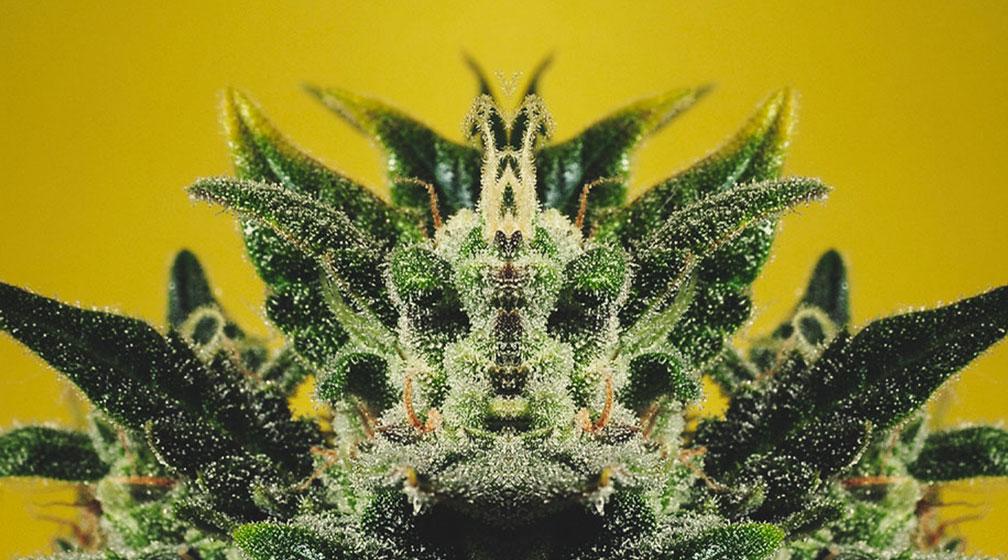 Wat betekent de zin 'De plant toont de waarheid'?