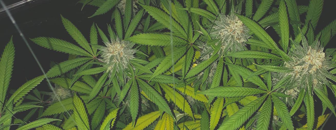 Jojo's voor planten