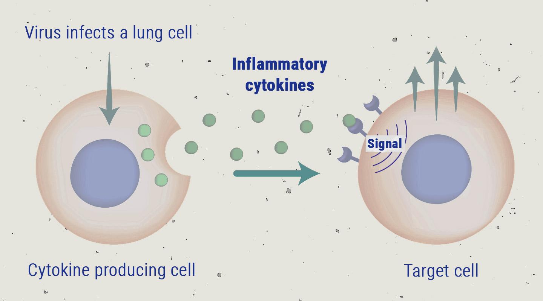 De cytokinestorm