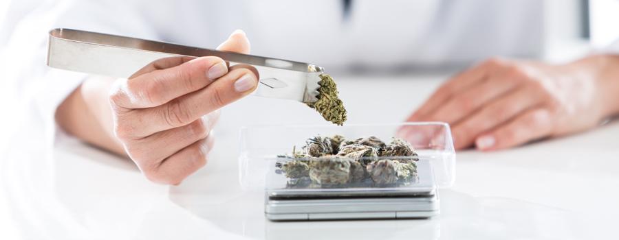 Allergische cannabis dosis