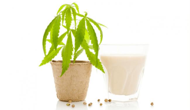 cannabis kokosolie marihuana melk ijs avocado mint