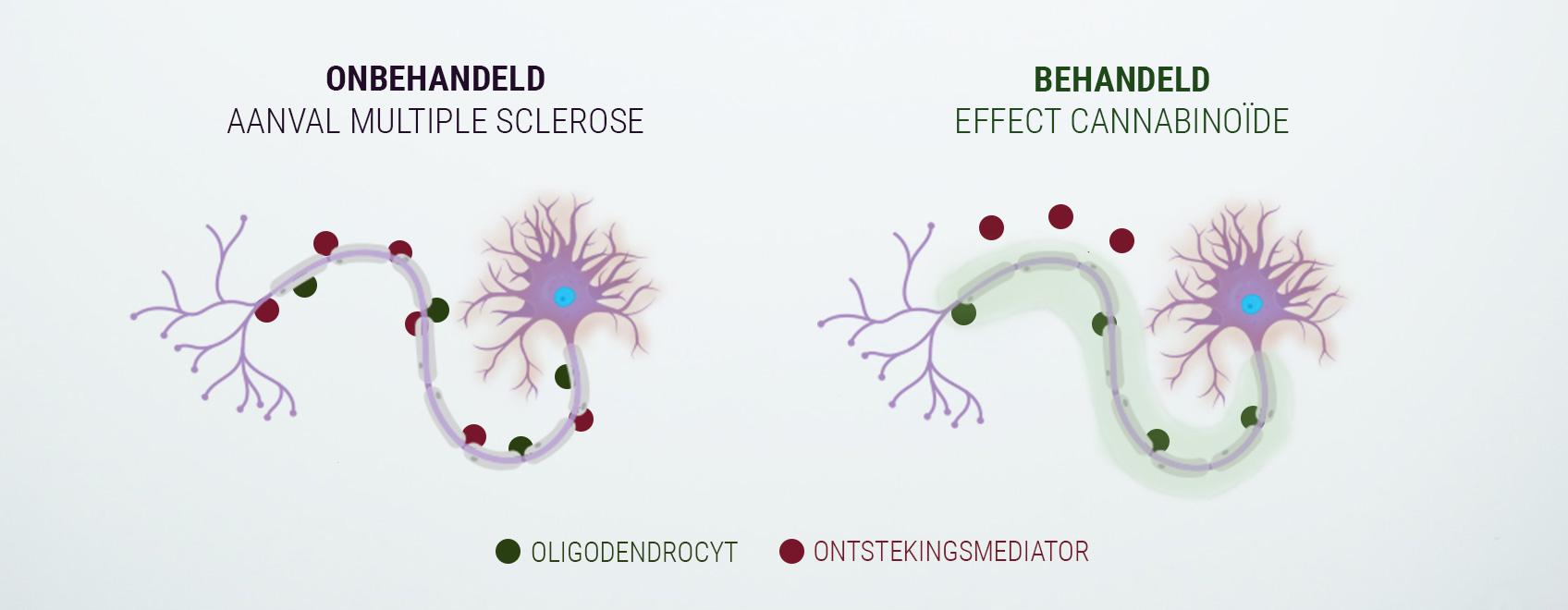 Het endocannabinoïdesysteem