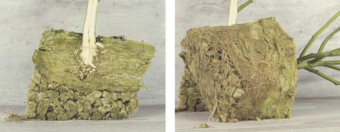 Kun je steenwol composteren?