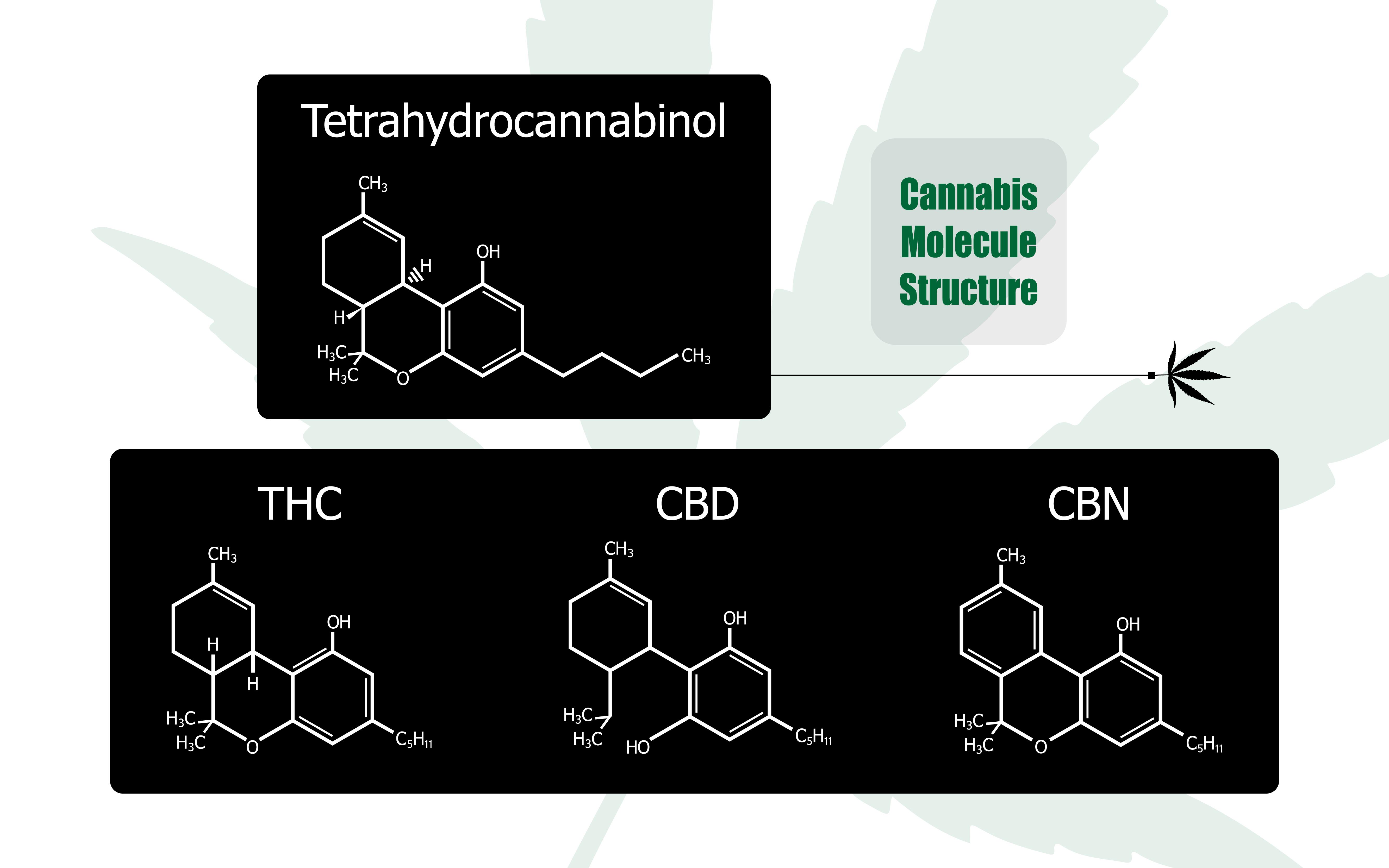 CBD THC entourage effect tegengaat symbiose immuunsysteem psyche cannabis medische marihuana cannabinoïde endocannabinoïde moduleren