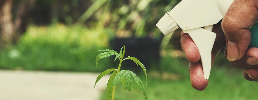 Defends Plants Against Disease