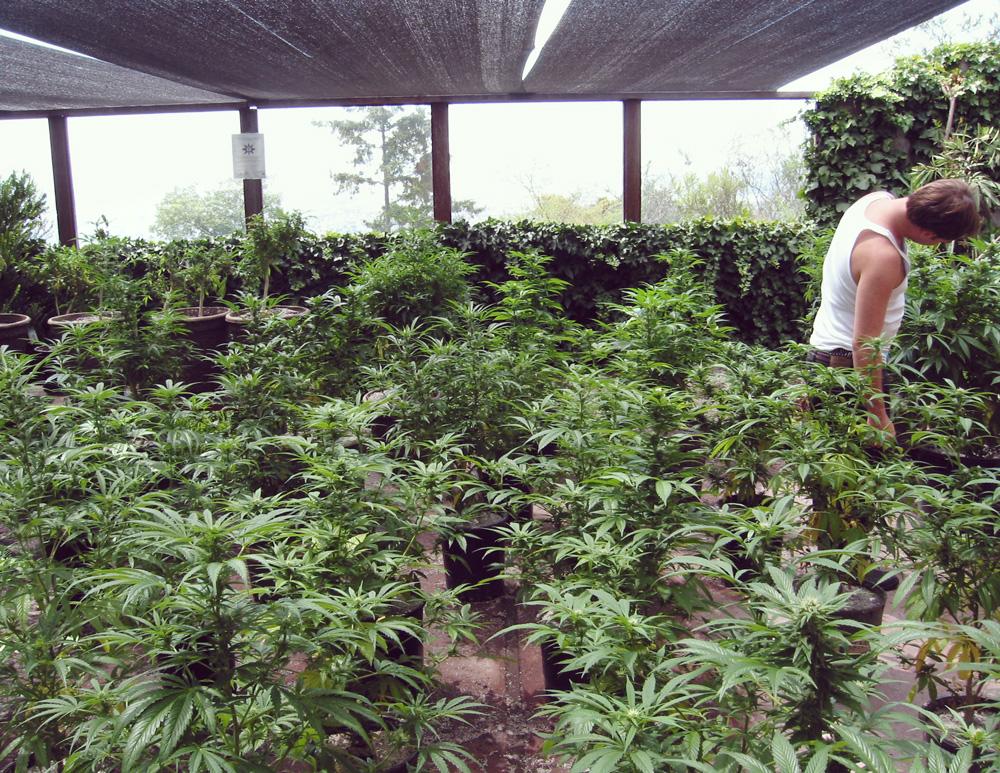 spanje legalisatie Catalonië wet recreatieve medische therapeutische marihuana