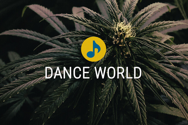 Dance World medicinaal cannabiszaad