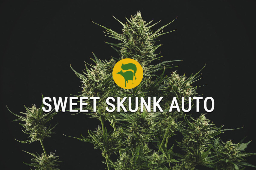 Sweet Skunk Automatic Cannabiszaad