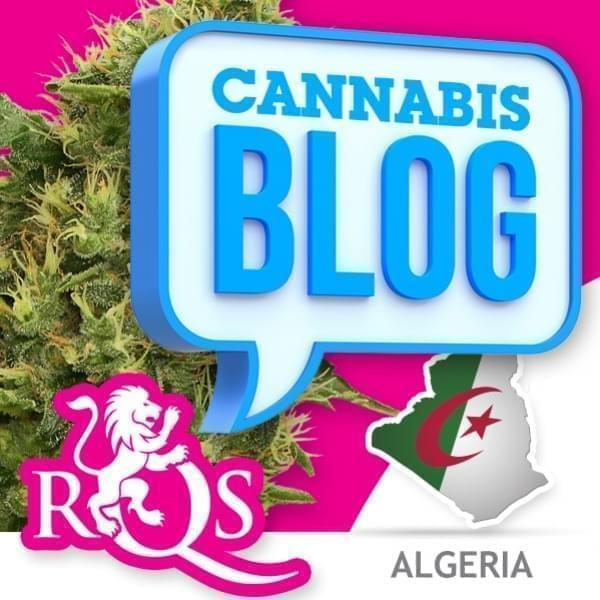 Cannabis in Algerije