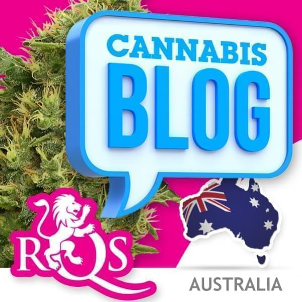 Cannabis in Australië