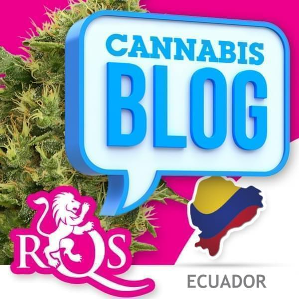 Cannabis in Ecuador