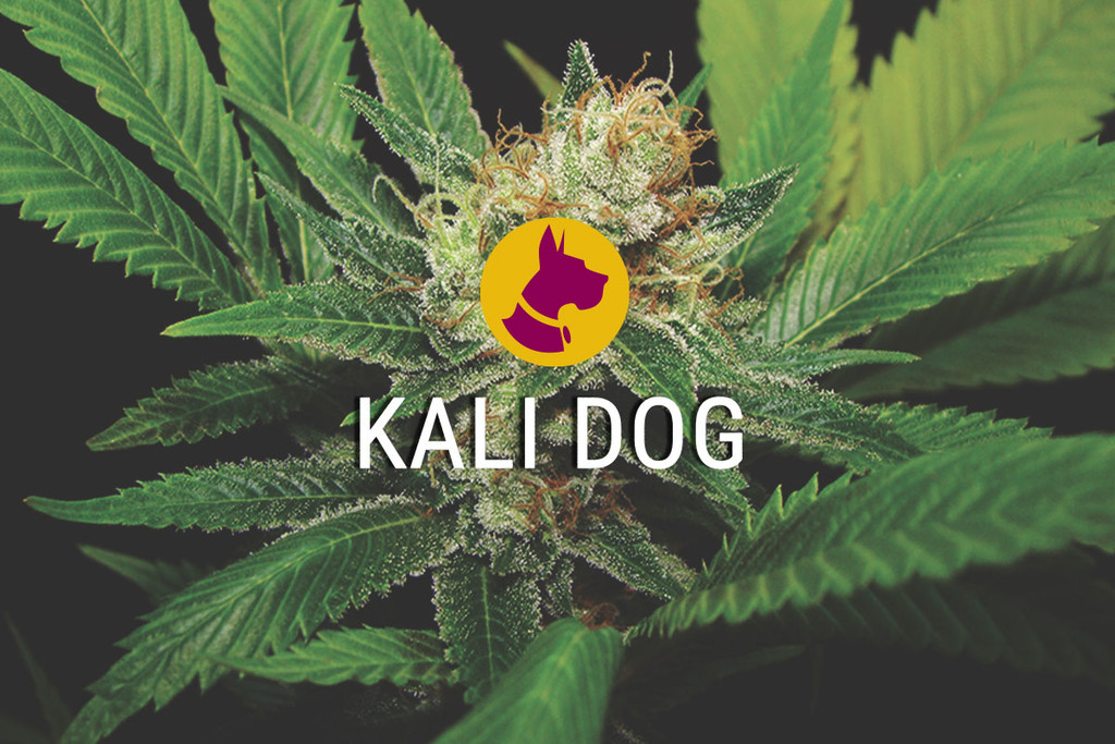 Kali Dog, een Royal Chem Dawg