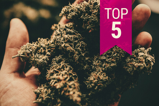De top 5 sterkste cannabissoorten — 2020 update