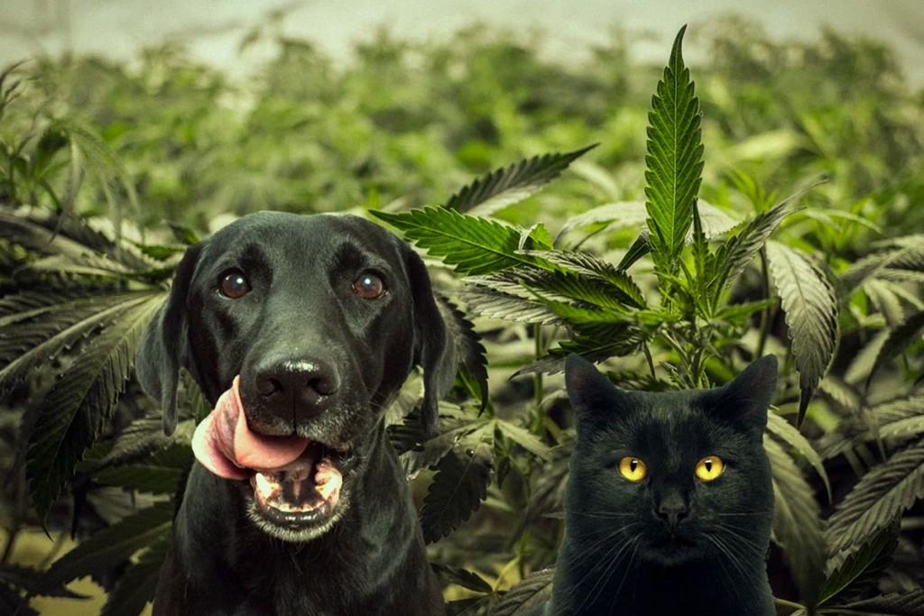 Kattenstront In Tuin : Honden katten en cannabis rqs blog