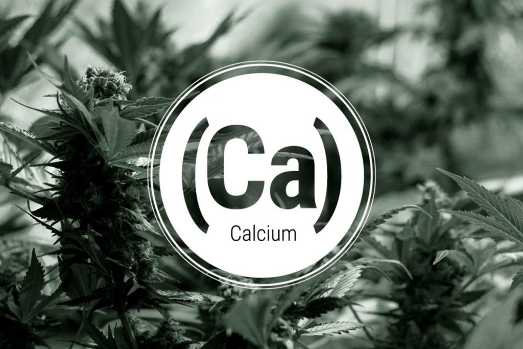 Calciumtekort In Cannabisplanten