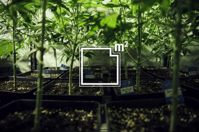 foto de Hoeveel Wietplanten Kun Je Telen Per Vierkante Meter? - RQS Blog