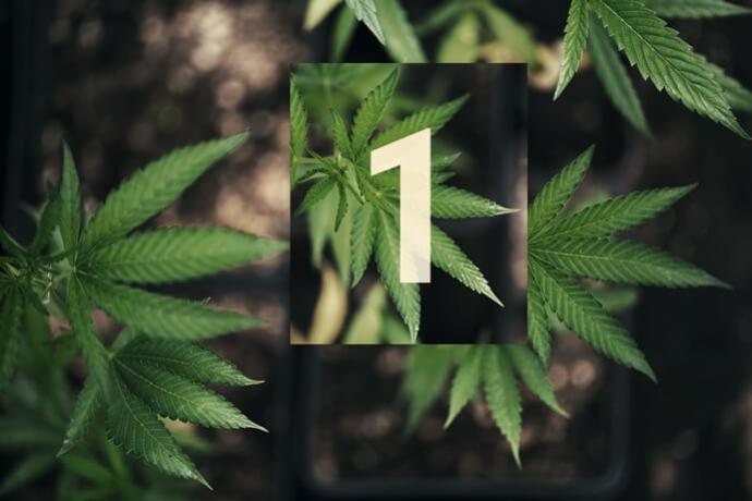 foto de Buiten Cannabis Kweken Deel 1: Aan De Slag - RQS Blog